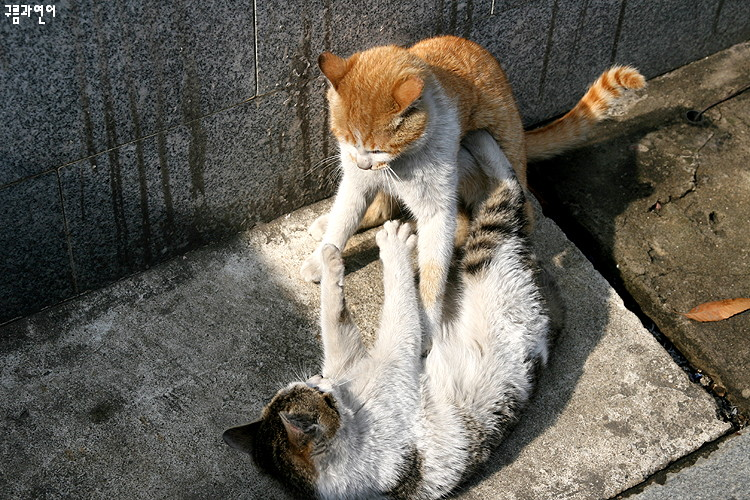野良猫報告書 @Lee Yong-han