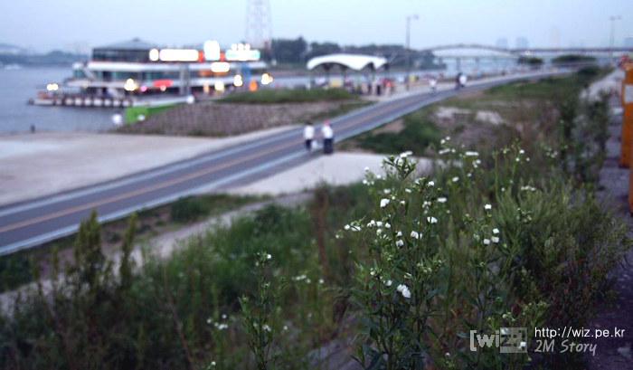 한강 꽃 사진