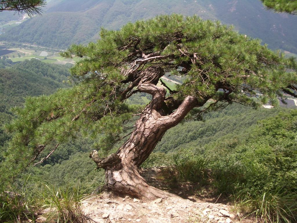 the tree of life deutsch