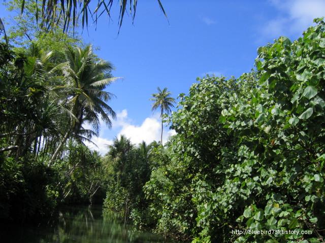 정글투어, 숏다리의 코코넛 열매따기