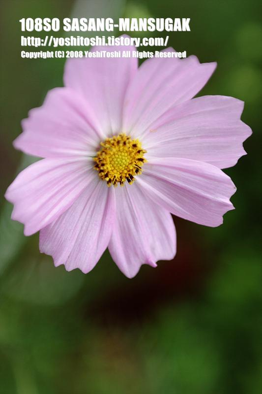 경주허브랜드 꽃사진8