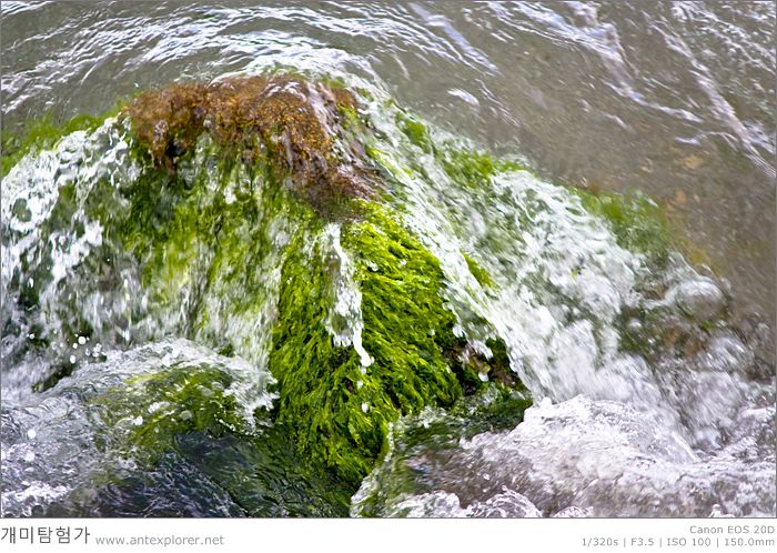 해초, 바다, 녹색
